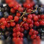 arandano rojo americano remedio plantas medicinales